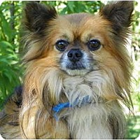 Adopt A Pet :: Jester - Hesperus, CO