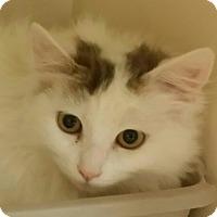 Adopt A Pet :: Elsa - San Fernando Valley, CA