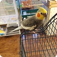 Adopt A Pet :: Dewey - Lenexa, KS