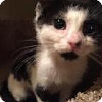 Adopt A Pet :: Betty - East Hanover, NJ