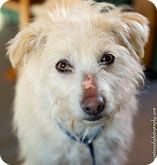 Terrier (Unknown Type, Small) Mix Dog for adoption in Worcester, Massachusetts - Austin