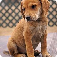 Adopt A Pet :: *Dot - PENDING - Westport, CT