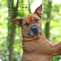 Adopt A Pet :: Banjo - Edwardsville, IL