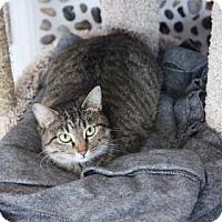 Adopt A Pet :: Kimberly Bimberly - Mission, KS