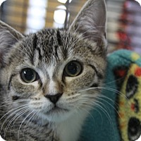 Adopt A Pet :: Levona - Sarasota, FL
