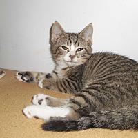 Adopt A Pet :: LUNA - Medford, WI
