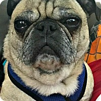 Adopt A Pet :: Tracker - Grapevine, TX