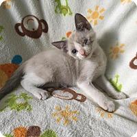 Adopt A Pet :: Marshmallow - Zolfo Springs, FL