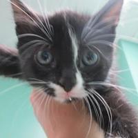 Adopt A Pet :: Kandy - Columbiana, AL