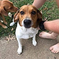 Adopt A Pet :: Sadie - Cincinnati, OH