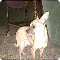 Adopt A Pet :: Howie - Salem, NH