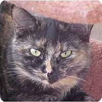 Adopt A Pet :: Esme - Lunenburg, MA