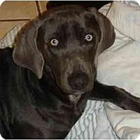 Adopt A Pet :: Charlie Blue  **ADOPTED** - Eustis, FL