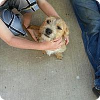 Adopt A Pet :: Halo - Cedar City, UT