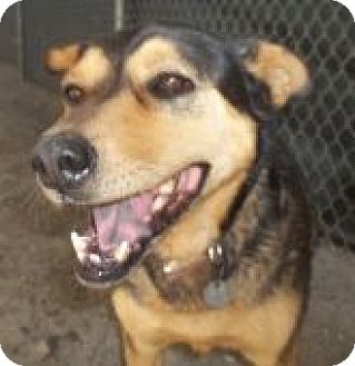 Shepherd (Unknown Type) Mix Dog for adoption in Silver City, New Mexico - Farley