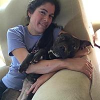 Adopt A Pet :: Brindle Lee - Lake Charles, LA