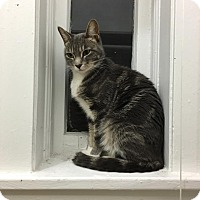 Adopt A Pet :: Thebes - Chicago, IL