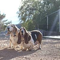 Adopt A Pet :: Matilda & Max - Acton, CA