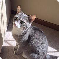 Adopt A Pet :: Rosie - Carlisle, PA