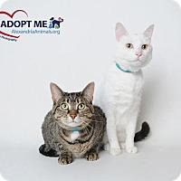 Adopt A Pet :: Boba - Alexandria, VA
