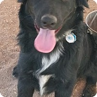 Adopt A Pet :: Molly - Las Vegas, NV