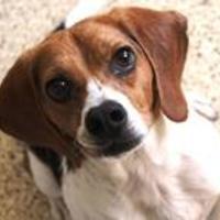 Adopt A Pet :: Bingo - Cedar Bluff, AL