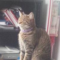 Adopt A Pet :: Scotland - Warren, MI