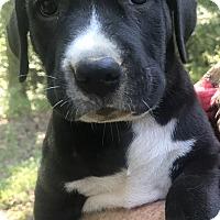 Adopt A Pet :: Rangler - Glastonbury, CT