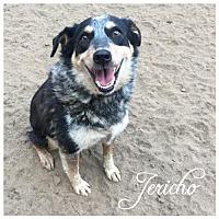 Adopt A Pet :: Jericho - Hope, BC