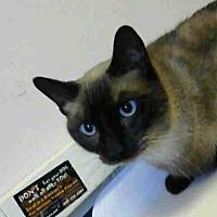 Adopt A Pet :: MEERA - Sacramento, CA