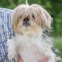 Adopt A Pet :: BUGGY - Methuen, MA