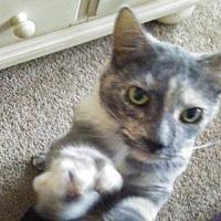 Adopt A Pet :: zz 'Iddy Biddy' URGENT courtesy listing - Cincinnati, OH