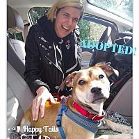 Adopt A Pet :: Honey-ADOPTED - Northville, MI