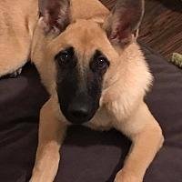 Adopt A Pet :: Serena - Nashua, NH
