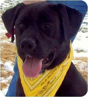 Labrador Retriever Dog for adoption in Wakefield, Rhode Island - ARTHUR