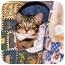 Photo 3 - Domestic Mediumhair Cat for adoption in Chesapeake, Virginia - Chico