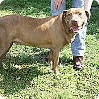 Adopt A Pet :: Rex - Wauchula, FL