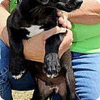 Adopt A Pet :: Ajax - Silsbee, TX