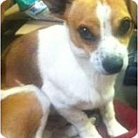 Adopt A Pet :: Ferbie - Oceanside, CA