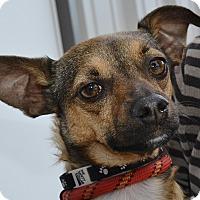 Adopt A Pet :: Roman - Meridian, ID