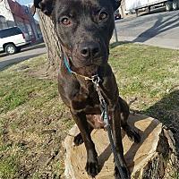 Adopt A Pet :: Bianca - Wichita, KS