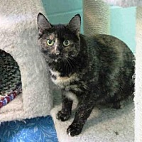 Adopt A Pet :: ROCKY ROAD - Hampton Bays, NY