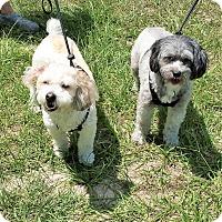 Adopt A Pet :: China and Romeo - Tavares, FL