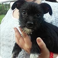 Adopt A Pet :: Celeste - Zolfo Springs, FL