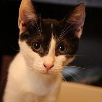 Adopt A Pet :: Ricoh - Philadelphia, PA