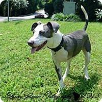 Adopt A Pet :: Brayden - Atlanta, GA
