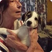 Adopt A Pet :: Bobby - Danbury, CT