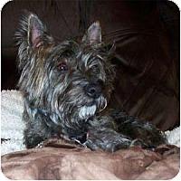 Adopt A Pet :: Bellatrix - Fremont, CA