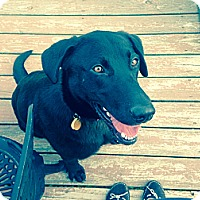Adopt A Pet :: Thunder - Lewisville, IN