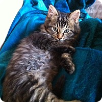 Adopt A Pet :: Leonida